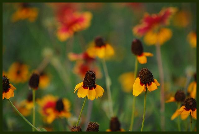 Road Trip Texas Senior Citizen Wildflowers