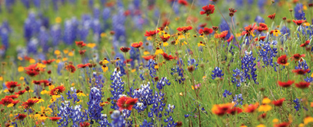 Best Hospice Care of Texas Golden Triangle
